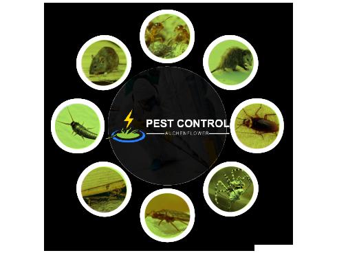 Pest Control Auchenflower
