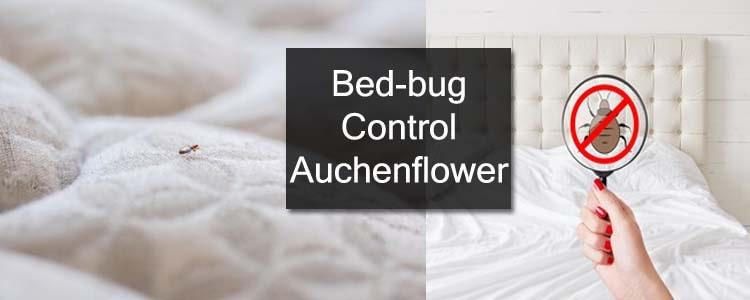 Bed Bug Control Auchenflower